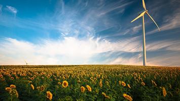 Energia eólica e campo de girassóis